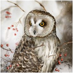 Short-eared Owl 2, 8x8 signed fine art print, Bird lower gift ($30) ❤ liked on Polyvore featuring home, home decor and wall art