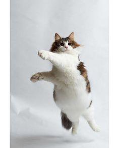 Kittens Cats Adoption most Cute Animals Hd Video; I Love Cats, Crazy Cats, Cool Cats, Cute Kittens, Cats And Kittens, Black Kittens, Fat Cats, Beautiful Cats, Animals Beautiful