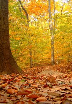 Holmdel Park in Monmouth County, New Jersey Copyright: Eric DOrvilliers