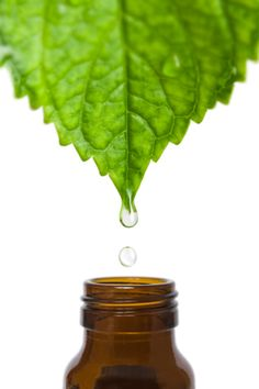 Essential Oils and Autoimmune Disease--Live Well, Live Naturally
