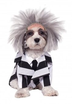 580051 BEETLE JUICE is brand new for 2014! Includes wig with attached forehead and signature striped jacket with attached dickie.  Just brush the wig out for a CRAZY look! Would your pet rock it?