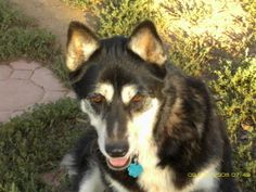 Circle L Ranch - This is Kiara, a husky mix. She's a senior with plenty of energy and life left.