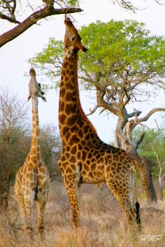 Through POWERSful Lenses . . . .: Kruger National Park, South Africa