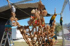 Make a climbing net for your parrot!