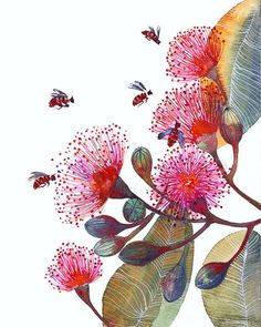 Pink Flowering Gum - flowers and bees, nature art print by OlaLiola, size 8x10 (No. 24). $19,00, via Etsy.