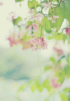 Have a lovely day .:*・゜♡゜・*:.ღ .:*・゜  Tenga un día precioso .:*・゜♡゜・*:.ღ .:*・゜  Bonne journée .:*・゜♡゜・*:.ღ .:*・゜  Buona giornata .:*・゜♡゜・*:.ღ .:*・゜