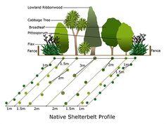 If your shelterbelt is next to a fence, use windbreak cloth on the . Garden Ideas Nz, Flower Garden Plans, Backyard Ideas, Full Sun Garden, Meadow Garden, Windbreak Trees, Wind Break, Outdoor Landscaping, Landscaping Ideas