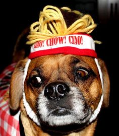 Chow...Dog Costumes!