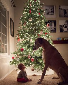 Take a look at these 13 ideas for baby's first Christmas photo. Celebrate baby's first Christmas with a photo shoot and transform your pictures into adorable Christmas cards for family and friends. Dog Christmas Pictures, Family Christmas Pictures, Holiday Pictures, Christmas Photo Cards, Christmas Card Photo Ideas With Dog, Baby's First Christmas Card, Xmas Pics, Christmas 2019, Christmas Ideas
