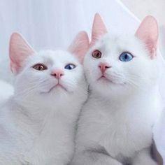 Fun | 27 keer bewijs dat het leven nooit saai is met katten