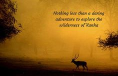 Lose & Find Yourself with the Mighty #Wildlife of Kanha! #TraveelPlace #Tourism #Wildlife #Kanha #MadhyaPradesh #CityShorPune