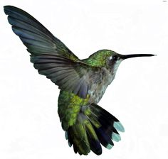 googl hummingbird, hummingbird tattoo, hummingbird algorithm, paper, colors, hummingbird feather tattoo, hummingbirds, animal, flash photography