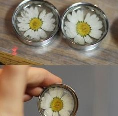 "Image of Real Daisy Plugs (sizes 1""-2"")"