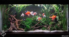 Planted goldfish tank. Presumably soon to be ruined!