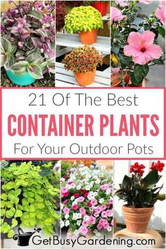 Choosing outdoor summer container plants should be easy, not overwhelming. Whether you're looking for container gardening plants for your full sun front porch, or a shade patio or balcony. Full Sun Container Plants, Full Sun Plants, Container Gardening, Container Flowers, Vegetable Gardening, Plants That Like Sun, Full Sun Flowers, Amazing Flowers, Organic Gardening