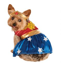 Give your pooch the real POW factor with this super cute #WonderWoman #costume! xoxo #superhero #dog #puppy #doggy #pets #superhero