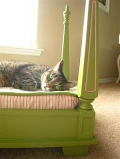 JunkCamp: Pet Bed Junk Project an old table becomes a nice cat (or dog) bed.way cuter than a lot of the diy beds Pet Beds, Dog Bed, Doggie Beds, Crazy Cat Lady, Crazy Cats, Diy Cat Bed, Animal Projects, Diy Projects, Here Kitty Kitty