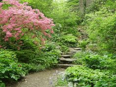 Garden in the Woods, Framingham, MA