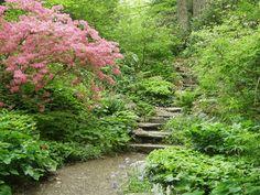 Garden in the Woods, Framingham, MA