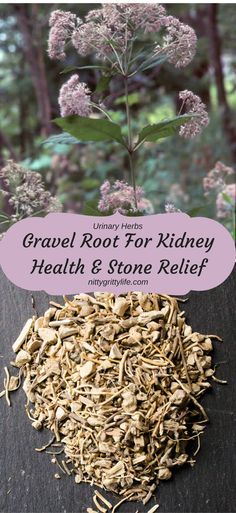 Gravel Root is a traditional herb used to address kidney stones, water retention, and abdominal inflammation.