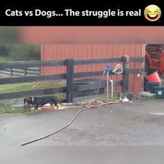 dogs and cats, do they get along. Your dogs and cats, do they get along.Your dogs and cats, do they get along. Funny Animal Memes, Funny Animal Videos, Cute Funny Animals, Funny Animal Pictures, Cute Baby Animals, Funny Cute, Funny Dogs, Animals And Pets, Cute Cats