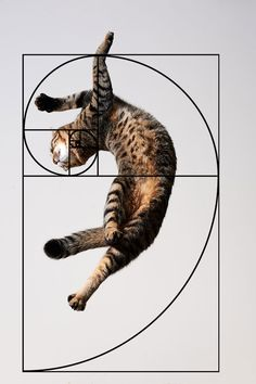 Cats are perfect! We do have proof this time, mind you. Ever heard of the Fibonacci sequence aka the Golden Ratio? Yeah, that thing is. Fibonacci Spiral, Golden Ratio, Golden Rule, Cat Sleeping, Sacred Geometry, Geometry Art, Cat Life, Neko, Fractals