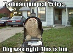 Funny Cat Photos - Have a Laugh Today! These Funny Cat Photos provide that humour break for when you need it most. Let's not take life so seriously - take some time for the silly! Funny Animal Memes, Cute Funny Animals, Cute Cats, Funny Memes, Adorable Dogs, Funny Kitties, Silly Cats, Animal Captions, Humorous Cats