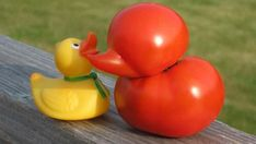 This once lonely tomato now has tons of friends. | 20 Ugly Vegetables That Grew Up To BeSwans