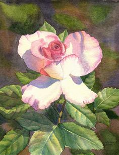 Pink white Rose, floral watercolor print of an original painting by Cathy HIllegas