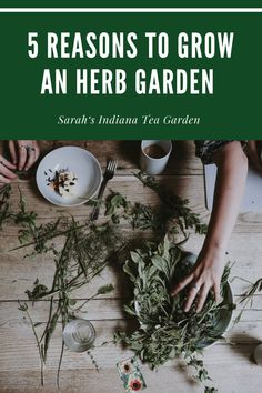 Whether you are a new gardener or someone that has been gardening for years, you need to add an herb garden into your garden plan. You can use herbs in cooking, in medicine and making herbal tea. Indoor herb gardening | Outdoor herb gardening | Medincinal herb gardens | Tea herb gardens | Culinary herb garden | Growing herbs for beginners | Gardening for beginners Growing Mint, Growing Herbs, Gardening For Beginners, Gardening Tips, Kitchen Gardening, Container Plants, Container Gardening, Organic Gardening, Indoor Gardening