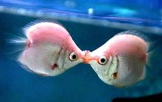 fishy fishy kisses... Reasons why you should carry a camera - animal-humor Photo