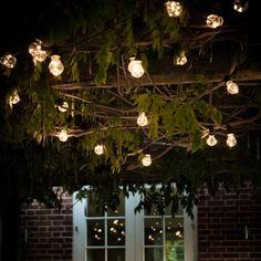 Festoon Lights - String of 20