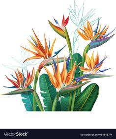 33 Ideas Flowers Garden Illustration Drawings When designing… Flowers Illustration, Garden Illustration, Jungle Flowers, Plant Logos, Birds Of Paradise Flower, Flower Sketches, Plant Drawing, Vector Flowers, Tropical Flowers