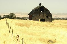 Abandoned barn in wheat field near Central, Oregon. I like the contrast in colors between the barn and field.