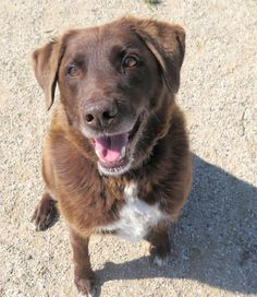 NewB - Labrador Retriever mix - Male - 9 yrs old - Sheridan Dog & Cat Shelter -Sheridan, WY. - http://dogandcatshelter.org/wp/ - https://www.facebook.com/dogncatsheridan - http://www.petango.com/Adopt/Dog-Retriever-Labrador-23766967 - https://www.petfinder.com/petdetail/30418742/