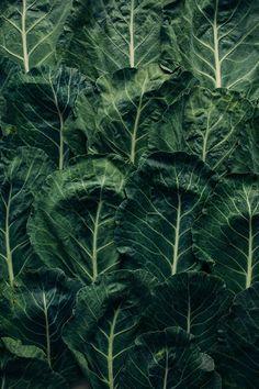 colorinspiration: plantenkunde