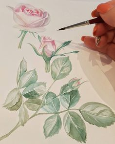 Watercolor by Maria Pirogova @marysimpledesign   #colorful #color #watercolor #watercolorpainting #draw #drawing #drawings #sketch #sketches #sketchbook #pink #brush #brushes #art #artist #exercise #training #paper #flower #rose #practice  #process #pink #instagood #instagram #instadaily #instapic #process