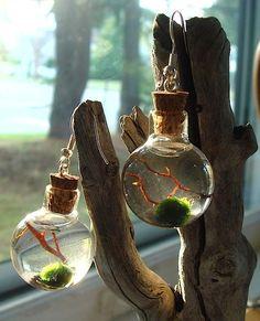 Mini Terrarium Earring Live Marimo Moss Ball Orb Bottle via Etsy. Water Terrarium, Mini Terrarium, Bottle Jewelry, Bottle Charms, Mini Aquarium, Marimo Moss Ball, Miniature Bottles, Bottle Garden, Mini Bottles