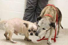 2 senior bonded dogs were surrendered to shelter.  Their human has stage 4 cancer and couldnt take care of them anymore. Thankfully they have been adopted.