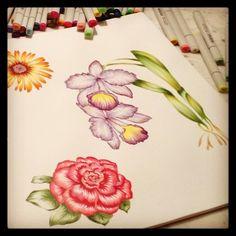 botanicals studies by @Marina Barbato   #mywork #markers #copic #copiclovers #copicmarkers #copicaddicted #ilustracao #illustration #flores #flowers #printandpattern #floralprint #estampas #estampasflorais  #marinabarbato #porummundomaisestampado #rose #orchid #rosa #orquidea