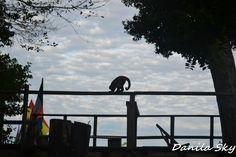 Monkey. Rurrenabaque. Bolivia