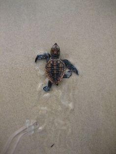 Tiny turtle!!