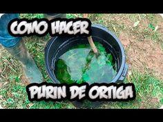 Cómo hacer y usar el purín de ortigas   Plantas