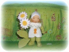 Gänseblümchen Susannelfe