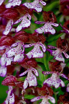 Red Floral Nacional: Especialidad: Orquideas