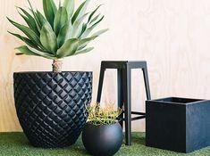Designer Pots – Exotic Nurseries & Landscaping