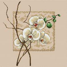 Gallery.ru / Фото #1 - Orchidea - zuzas