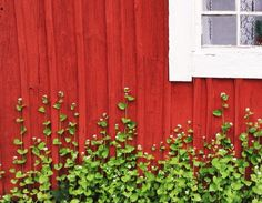 Swedish cottage in spring.