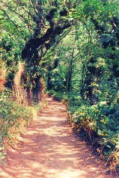 Camino De Santiago Photos
