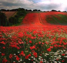 Field of poppies / 1920 x 1280 / Nature / Photography Beautiful World, Beautiful Places, Beautiful Pictures, India Linda, Amazing Nature, Belle Photo, Oeuvre D'art, Beautiful Landscapes, Wonders Of The World